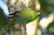 Zealandia Karori Sanctuary