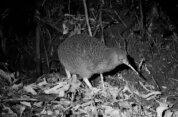 Zealandia By Night Wildlife Sanctuary Tour
