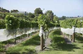Hakes Bay Winery, New Zealand