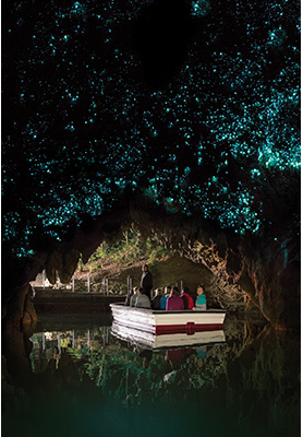 Waitomo Glowworm caves