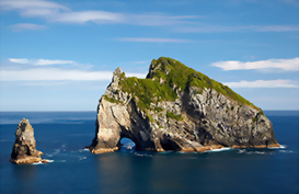 Explore the coastal landscape of the Bay of Islands
