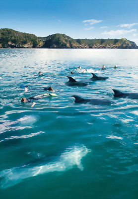 Dolphins in cove