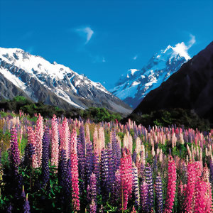 New Zealand National Park