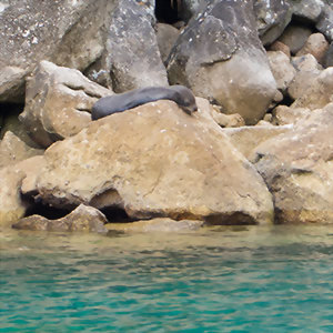 Fur seals, Abel Tasman, New Zealand