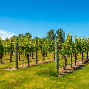 New Zealand wineries and vineyards