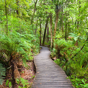 Waipoua Forest, Northland, New Zealand