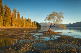 That Wanaka tree on a calm day with a low lake