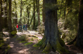 New Zealand's unique and ancient forests