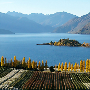 Wanaka's vineyards sit in a unique climate and produce superb New Zealand wines
