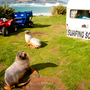 Two New Zealand fur seals explore the local surf school