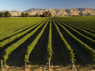 Explore Marlborough on a New Zealand wine tour